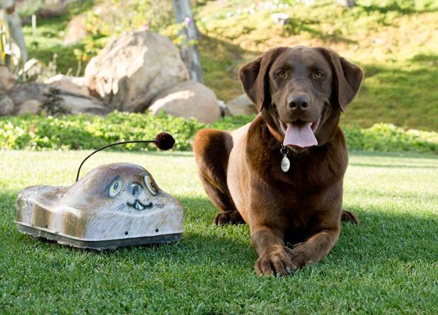 Labrador trifft auf Go Go Dog Pal. (Foto: gogodogpals.com)
