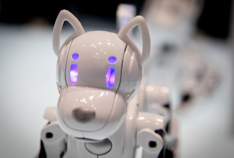 So sieht der i-SODDOG aus. (Foto: Robots-Dreams.com)