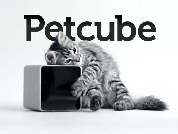 Och... wie süß! Wer schmilzt die nicht gleich dahin? (Foto: petcube.net)