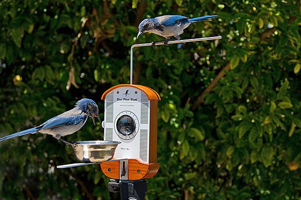 Gleich kommt das Vögelchen... (Foto: ThinkGeek)