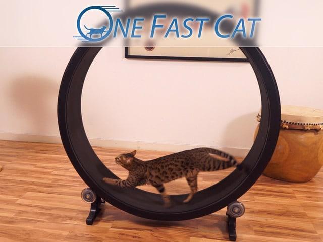 Dreht die Katze durch? (Foto: Kickstarter)