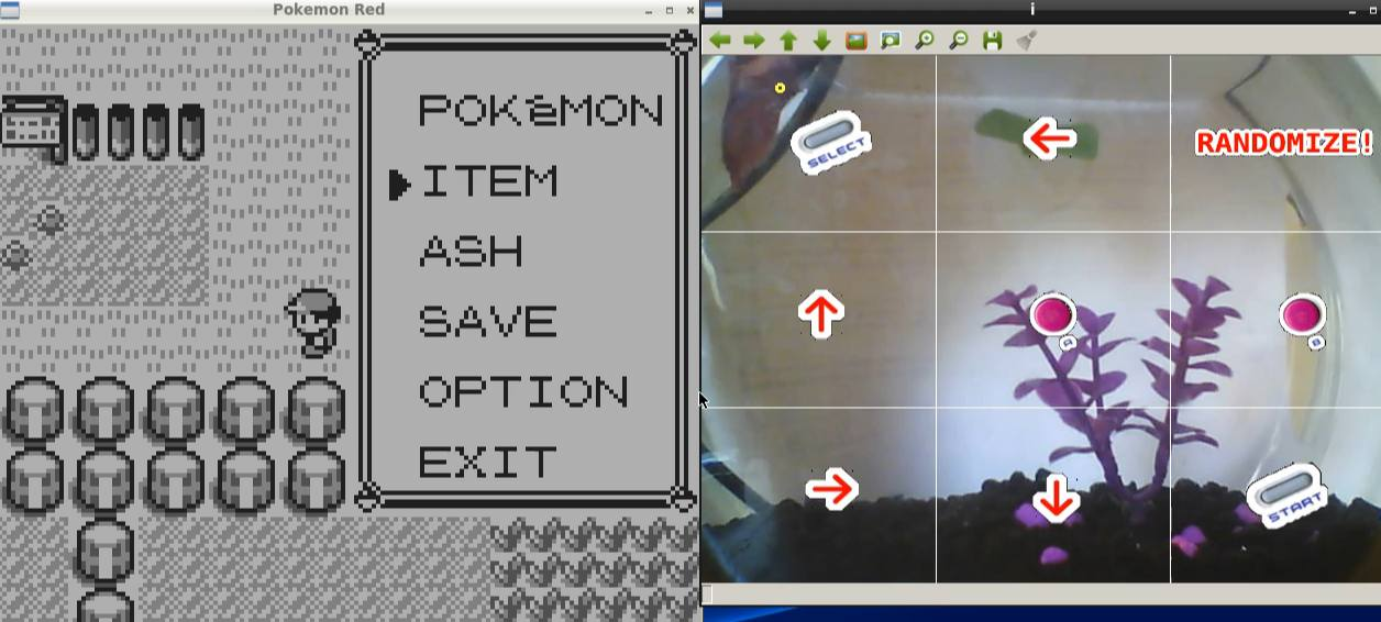 Rechts der Fisch, links Pokemon Red. (Foto: Twitch.tv)