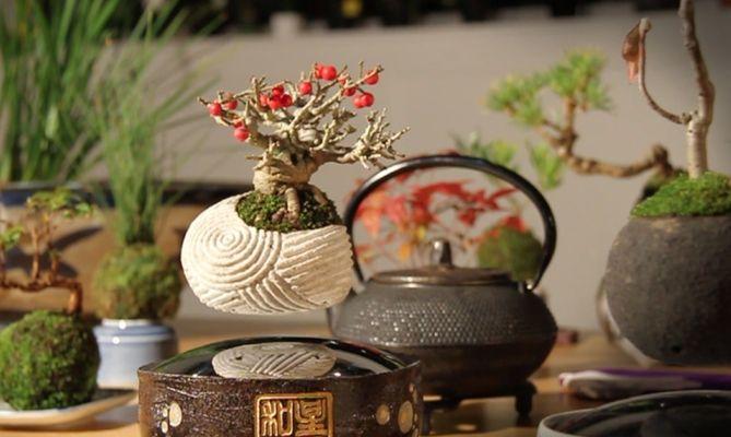 Schon schön anzusehen. (Foto: Hoshinchu Air Bonsai Garden)