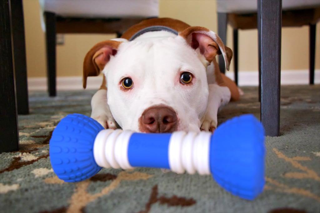 Nicht nur Hunde sollen ihre Freude haben. (Foto: GoBone)