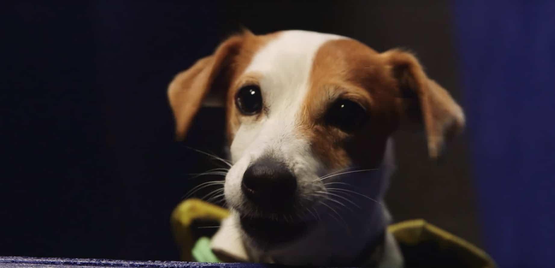 Darf ich vorstellen: Pac-Dog! (Foto: Screenshot)