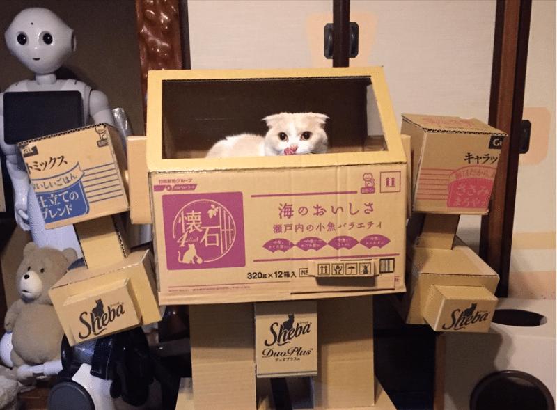 So süß! (Foto: Kyoryu Kuramo)